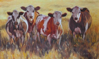 e851e-sunset-cows