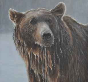 c384c-grizzly-portrait-for-web