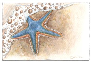 sea star small